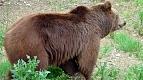 Transylvania Tour Collection | Romania Travel Tour Trips | Transylvania Tours - Bear Watching 2