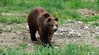 Transylvania Tour Collection | Romania Travel Tour Trips | Transylvania Tours - Bear Watching 3